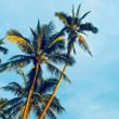 TUI oferty na wakacje na Kubie! Last Minute!