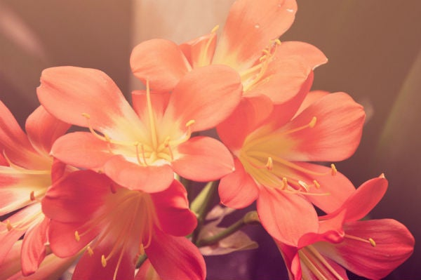 Cupon descuento interflora