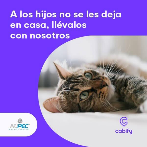 cabify para tu mascota